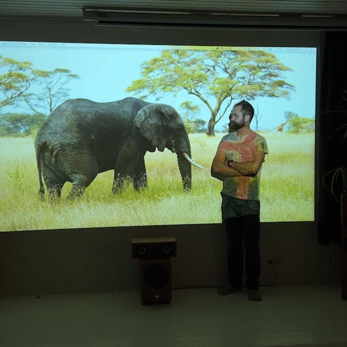 image d un elephant projetee sur un mur dans un bureau